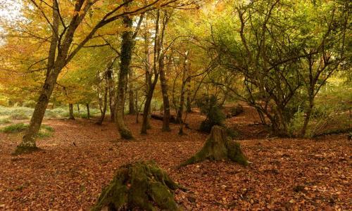 5 planes para disfrutar del otoño en las Merindades