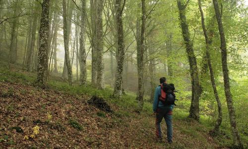 Los Montes de Carrales