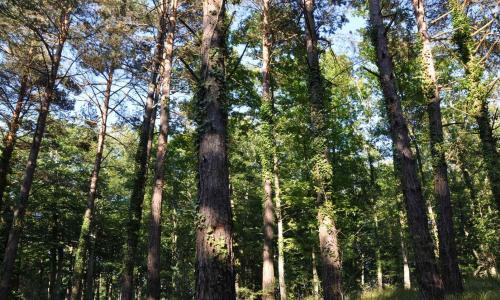 PRC-BU 138 Bosques de Oteo y Alto de Guardia