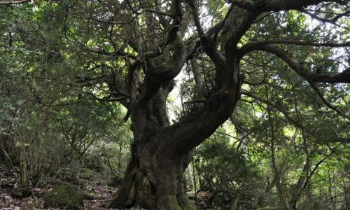 M. de Valdivielso entre bosques y frutales