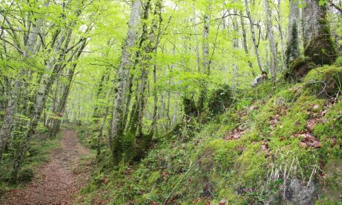 Valle de Valdebezana