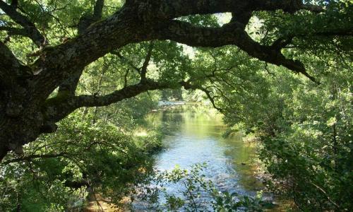 Riberas del Nela y afluentes